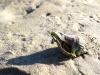 mashes_beach_30