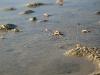 mashes_beach_61