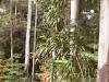 mt-tambourine-nature021