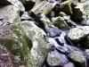 mt-tambourine-waterwall040