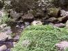 mt-tambourine-waterwall053
