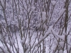 ellis_2nd_snowfall044