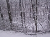ellis_2nd_snowfall066