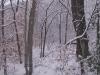 ellis_2nd_snowfall073