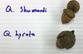 acorns01