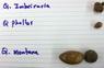 acorns07